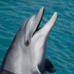 морски делфин